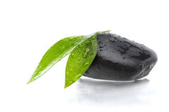 Green leafs on black stone. Two green leafs on black stone Royalty Free Stock Images