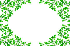 Green leafs border design Stock Image
