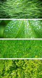 Green leafs. Royalty Free Stock Photography