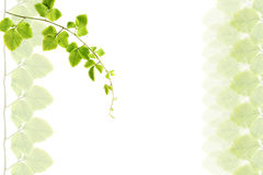 Green Leafs Frame. Royalty Free Stock Photo