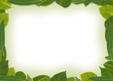 Green Leafs Frame. XXL Natural border, designed with real leafs Royalty Free Stock Photography