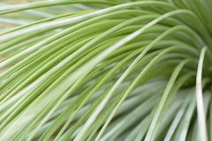 Green leafs. Indoor garden sunshine Stock Photos