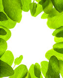 Green leafs isolated frame background Royalty Free Stock Photos