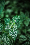 Green leafs nature tropic Stock Image