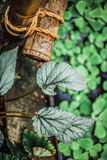 Green leafs nature tropic Royalty Free Stock Photos