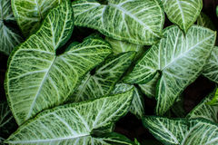 Green leafs pattern texture background Stock Photo