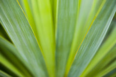 Green leafs of plant Royalty Free Stock Photos