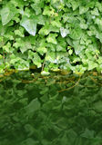 Green leafs reflection. A miedievial monastery fountain detail Royalty Free Stock Image