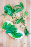 Green leafs sorre, spinach and vegetarian sandwich Stock Image