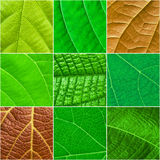 Green leafs square collage - seamless pattern Royalty Free Stock Photography