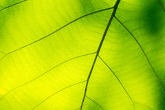 Green leafs texture background Stock Image