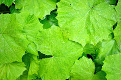 Green leafs textures royalty free stock photo