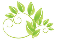 Green Leafs - Vector Stock Photo