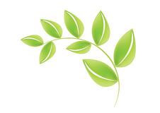 Green leafs - vector Stock Image
