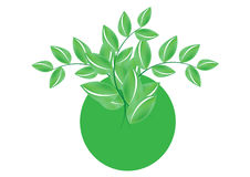 Green leafs - vector Royalty Free Stock Photo