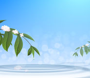 Green leafs and water drop on blue sky background Stock Photo