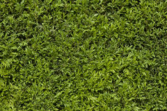 Green leafy background Stock Photos
