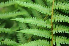 Green leafy background from the forest Stock Photography