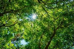 Green Leafy Background with Sunburst Stock Image