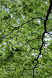 Green leafy background Stock Image