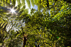 Green leafy branches against blue sky. Low angle view Stock Images