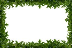 Green leafy hedge frame Royalty Free Stock Images