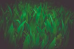 green leafy herbs in the shade royalty free stock image