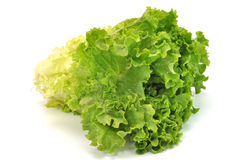 Green Leafy Lettuce Stock Photo