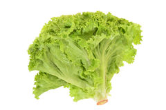 Green Leafy Lettuce. Isolated On White Background Stock Photo
