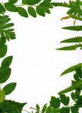 Green leafy natural border Stock Photo