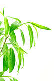 Green leafy plant Stock Photo