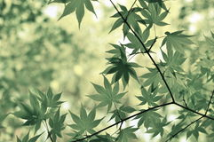 Green Leafy Plant Royalty Free Stock Photography