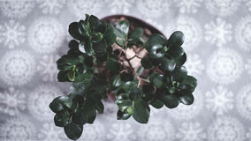 Green Leafy Plant on Flower Pot Royalty Free Stock Images