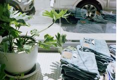 Green Leafy Plant Beside Pants Near Window Stock Photography