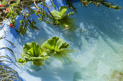 Green leafy plants floating Royalty Free Stock Images