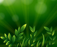 Green leafy plants. Illustration of the green leafy plants stock illustration