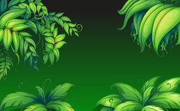 Green leafy plants. Illustration of the green leafy plants Stock Image