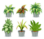 Green leafy plants Stock Photos