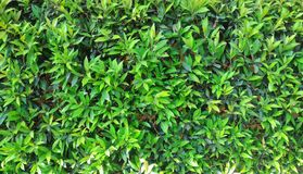Green leafy plants. Nature background Stock Images