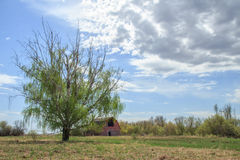 Green leafy tree in front of barn Royalty Free Stock Images