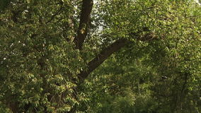 Green leafy trees in the park stock video footage