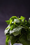 Green leafy vegetable Royalty Free Stock Photography
