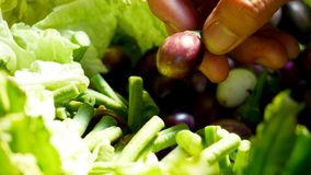 Green leafy vegetables royalty free stock photography