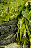 Green leafy vegetables, mixed Royalty Free Stock Photos