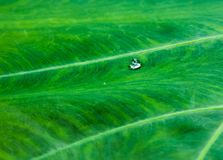 Green Leafy Water Droplet Royalty Free Stock Photo
