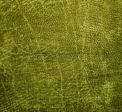 Green leather Stock Photography