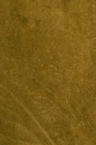 Green leather Royalty Free Stock Photos