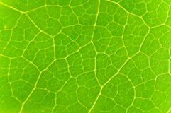 Green leave Stock Images