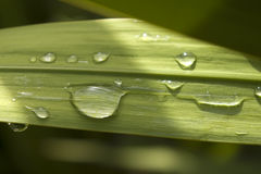 Green Leave. With some water drops. Amazing colors Royalty Free Stock Photography