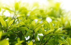 Green leave Stock Photography